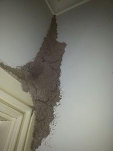 termite-mudpack-in-gumdale